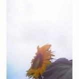 『天に向って』の画像