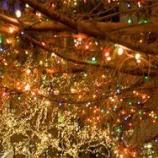 『クリスマスの感謝の気持ちと、maniacsの考える平等ついて』の画像