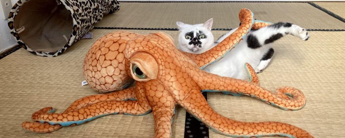 海の近くに猫と住んでる イメージ画像