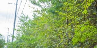 【怖い話】茂みに体半分入れてる人がいた。ヤバい人?かかわらないに限るな…と思ってたら「すみません」と声をかけてきて…