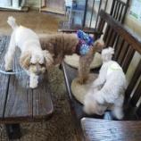 『さぁ!ドッグランで遊ぶ時間ですよ!ホテルのワンちゃんたちは元気いっぱい!』の画像
