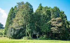 京都の小さな鎮守の森 外国人の反応は