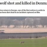 『オオカミの無慈悲な射殺:デンマーク』の画像