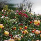 『景観が美しい! 野山の自然にとけこむローズガーデン  』の画像