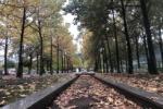 小さい秋というかもうがっつりと秋見つけた!いきいきランド交野のミルキーウェイのところ