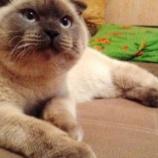 『 政(まつりごと):ロシアの選挙で猫が圧勝』の画像
