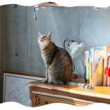 『猫だらけ』の画像