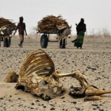 『ケニヤでカバが危機』の画像