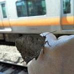 my蝶あるばむ
