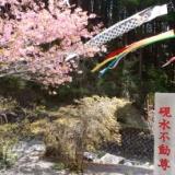 忍野必勝フライ発見! 2014.5.7の写真