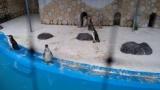 おっさんだけど1人動物園なう(´・ω・`)(※画像あり)