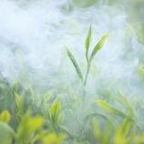 『日本の緑茶のネオニコチノイド混入率100%』の画像