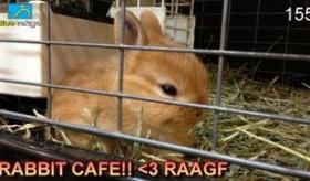 【日本の店】   日本には うさぎだらけの 「うさぎカフェ」 というものがある!?    海外の反応