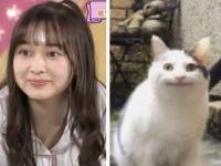 【乃木坂46】鈴木絢音と猫の顔がそっくりwwwwwww