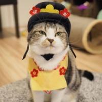 3COINS(スリコ)のペット用ひな祭りアイテムがやっぱりかわいい♡