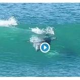 『とってもかっこいいね!イルカのサーフィン #サーフィン』の画像