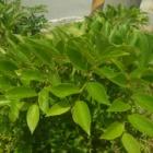 『暑いけど、植物はたくましい』の画像