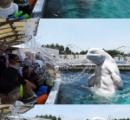 大阪湾にイルカがおるらしい