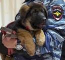 【画像】ロシアからフランスに贈られたイヌ、ドブルイニャちゃんの御尊顔