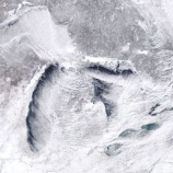 『北米大寒波による動物たちの死』の画像