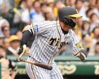 阪神・高山俊(27) .239(117-28)1本8打点0盗塁23三振OPS.664←これが育成失敗扱いされる理由
