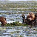 『野生動物たちの楽しい写真コンテスト』の画像