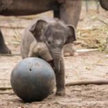 『ゾウの赤ちゃん』の画像