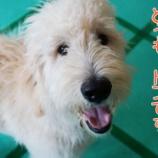 『大型犬でも大歓迎!6ヵ月未満はパピー料金がお得♪』の画像