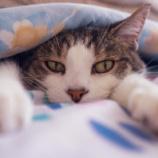 『ロシアは野良猫でさえ美男美女という事実』の画像