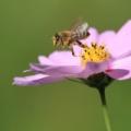 1985年3月8日は、「ミツバチの日」