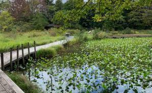 「ドハマり」した箱根湿生花園
