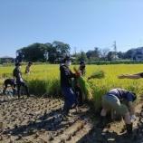 『二年ぶりの収穫祭』の画像
