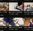 【画像】ネコ系Youtuberさん、なぜか一つだけ動画の再生数が爆上げしてしまう