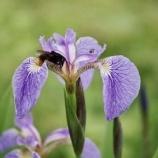 『蜂の音と花びらの秘密』の画像