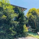 『夏樹の家だけに樹がいっぱい』の画像