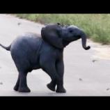 『仔ゾウ対ツバメ』の画像
