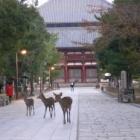 『奈良 11/15/2011 晴れ 』の画像