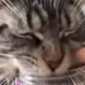 ネコに少しだけ「キャットニップ」をあげてみた。もっと、もっとにゃ! → 猫、止まりません…