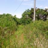 『山武市小松  原野に還る旧分譲地』の画像