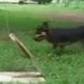 【イヌ】 庭には小さな「投石機」が置いてあった。犬がボールを持ってくる → こうします…