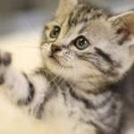 家猫の平均寿命17歳、野良猫の平均寿命7歳、差がありすぎやろ!