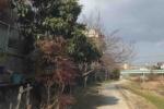 今日も天の川散歩!琵琶の花をつつく鳥がいたと思ったらメジロに遭遇!ちょっと春の予感