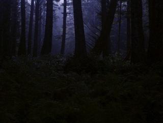 山で木に何かを打ち付けるヤバい女に遭遇。翌日、その場所を見に行ったら大変なことが・・・