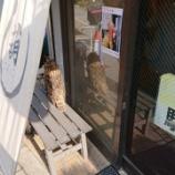 『【乃木坂46】あのフクロウが・・・いた!!!!』の画像