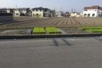 キレイに整列しているものとは??交野市内で田植えが本格的に始まってきてるみたい!
