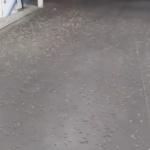 EVO開催地のラスベガス。バッタが大増殖していると話題に。