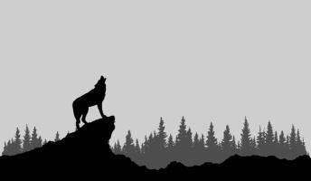 絶滅したニホンオオカミの頭骨、民家で発見される!魔除のためか