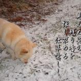 『フォト短歌「愛しき仕草」』の画像