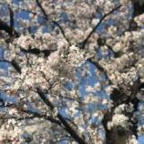『【朝のご挨拶】今日は戸田市内の小学校入学式。記憶に残る日になってほしいと心より願います。49年前の自分の入学式の記憶、胎内記憶のある子どもたちの話などを思い出しました。』の画像