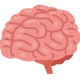 人間の脳みそってどんな味するのかな?